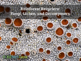 Rainforest Recyclers: Fungi, Lichen, and Decomposers Dista