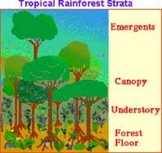 Rainforest SMART Board Thematic Unit