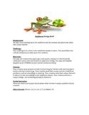 Rainforest STEM Design Brief
