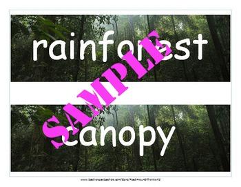 Rainforest Terms