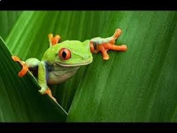 Rainforest Unit Bundle