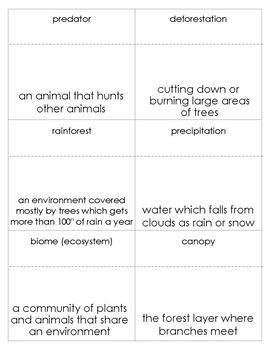 Rainforest Vocabulary Bingo