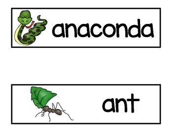 Rainforest  Animals Vocabulary Word Cards