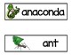 Rainforest  Animals Vocabulary Word Cards