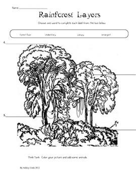 Rainforest and Sloth Study