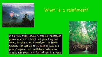 Rainforest flip chart