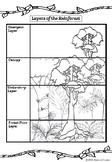 Rainforest lesson activities