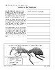 Rainforests: Insects and Other Decomposers