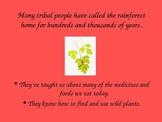 Rainforests Powerpoint