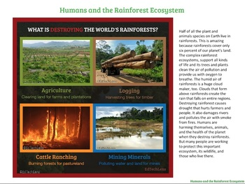 Rainforests in Danger and What We Can Do About It PDF