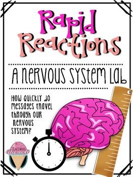 Rapid Reactions: A Nervous System Lab