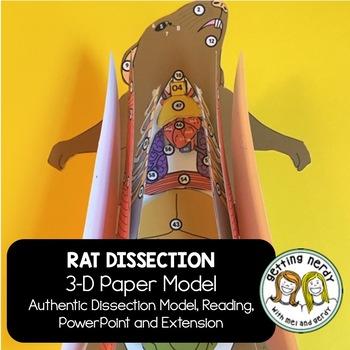 Rat Paper Dissection - Scienstructable 3D Dissection Model