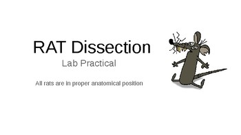 Rat Dissection (Organ and Systems) Lab Practical Test