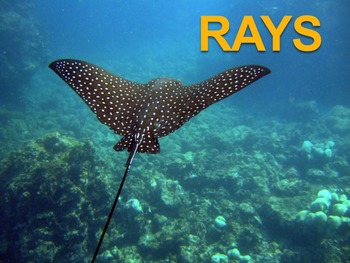 Rays - Powerpoint