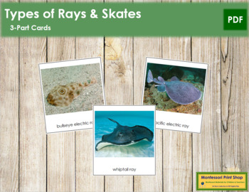 Rays and Skates: 3-Part Cards