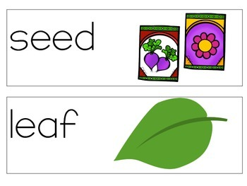 Vocabulary Cards Reach for Reading Kindergarten Unit 4: All Kinds of Plants