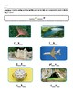 Reach for Reading by National Geographic Phonics First Grade Unit 4 Weeks 1- 4