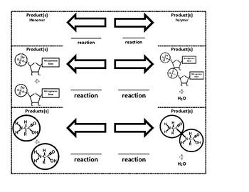 Reactions Interactive Notebook