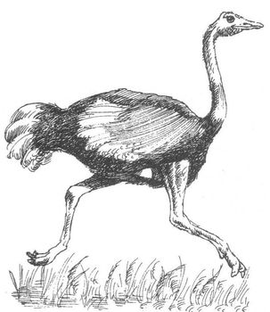 Animals: Largest Birds OSTRICHES Wksht w/6 Multiple Choice Reading Comprehension