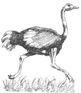 Animals: Largest Birds OSTRICHES Wksht w/6 Multiple Choice