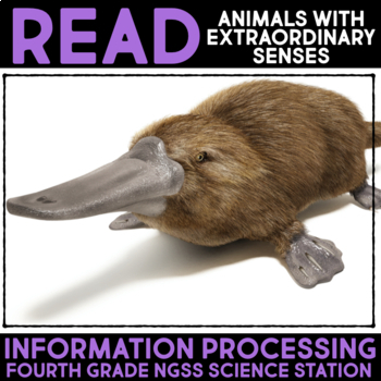 Read about Animals with Extraordinary Senses - Information Processing