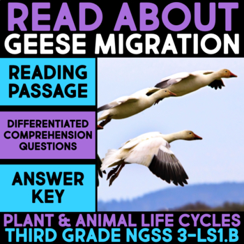 Read about Geese Migration - Science Station