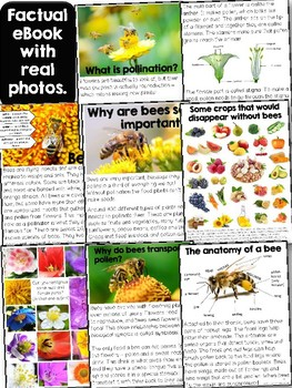 Reader: Bees and Pollination - Nonfictional with real photos