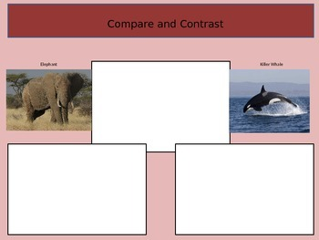 Reading Compare and Contrast Presentation
