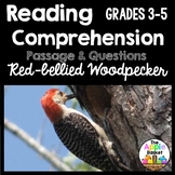 Red-Bellied Woodpecker Informational Passage