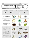 Reading Comprehension Quiz [High Level Questions] (NONFiction) SPIDERLING GROWS