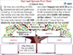 Reading Comprehension: Fact and Opinion Tree Chart - MAC Gr. 3-8