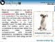 Reading Comprehension: Main Idea - MAC Gr. 3-8