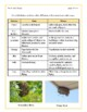 Reading Comprehension Packet B for Grades 5-6