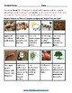 K - 2 Life Cycle of Apple Tree for Traditional Students - Reading - Science