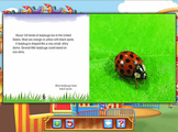 Reading - Ladybugs