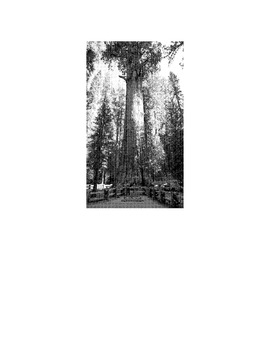 Reading in Social Studies GENERAL SHERMAN SEQUOIA TREE Lesson w/12 Mul Choice Qs