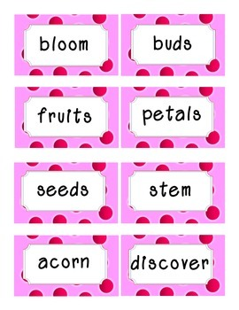 Reading Street Amazing Words-Kindergarten-Unit 2 (Pink)