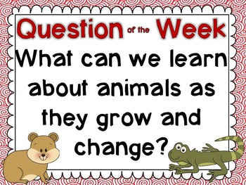 """Reading Street First Grade """"The Class Pet"""" Additional Resources"""