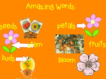 Reading Street Flip Chart Unit 2 Week 1 Flowers