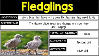 Reading Street Grade 2 Unit 1 - Week 3 Vocabulary