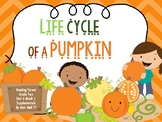 Reading Street Life Cycle of a Pumpkin Unit 4 Week 2 Differentiated 2nd grade