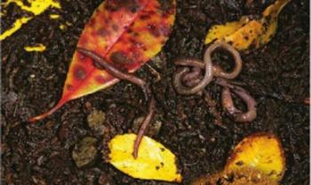 Reading Street - Soil Amazing Words