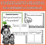 Reading Street Unit 2 Week 2: Animal Babies In Grasslands