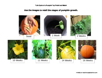 """Reading Street, Unit 4 """"Life Cycle of a Pumpkin"""""""