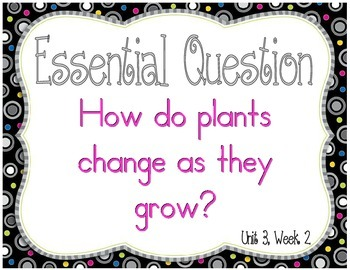 Reading Wonders Essential Questions Posters for First Grade