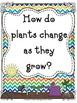 Reading Wonders First Grade- Unit 3 Week 2