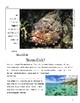 "2 Articles Paired ""Stonefish"" & ""And the Winner is..""Reading & Writing Test Prep"