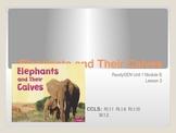 ReadyGen First Grade Unit 1 Module B Lesson 3 Elephants an