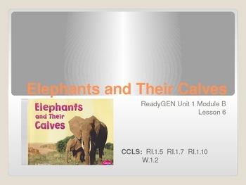 ReadyGen First Grade Unit 1 Module B Lesson 6 Elephants and Their Calves