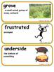 ReadyGen Treasure in the Trees Vocabulary 3rd Grade Unit 1 Module B